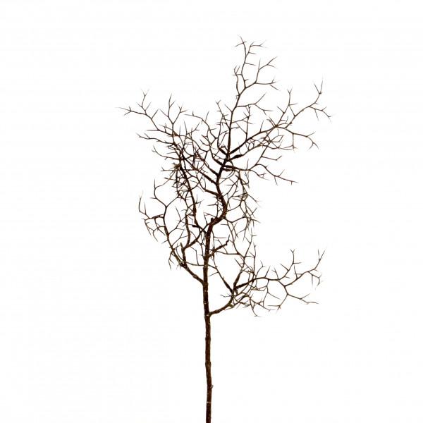 Weidenzweig, 60cm natur