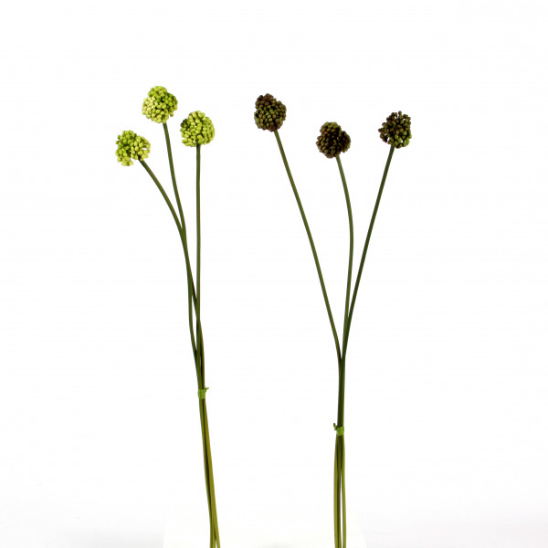 Lauchpflanze, 60cm, grün sort.