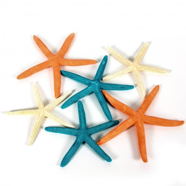 Finger Starfisch 10-15 cm Blt. x10 Stück