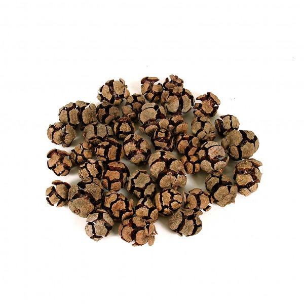 Zapfen Pinus Cypressus 1 KG Netz natur
