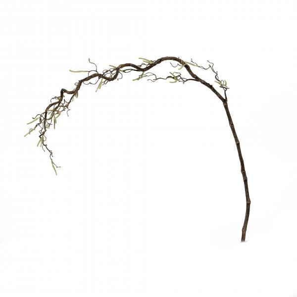 Korkenzieherhasel, 120 cm, natur