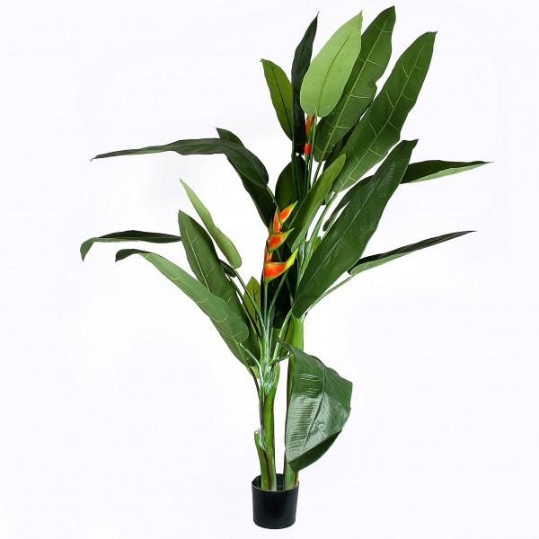Heliconia-Pflanze x 3, 170 cm