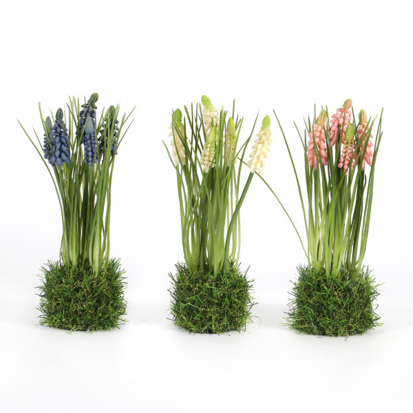 Muscari x 5 im Gras getopft, 24 cm