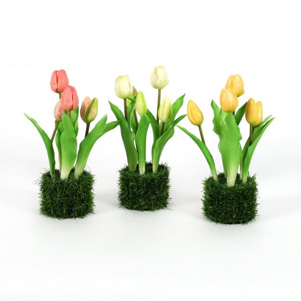Tulpe Royal x 5, 25 cm, im Grasballen