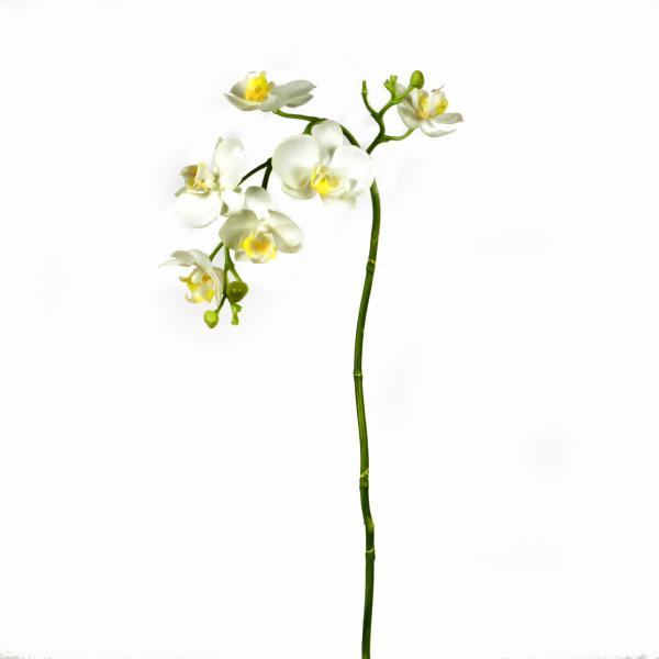 Phalaenopsiszweig, creme, 66cm