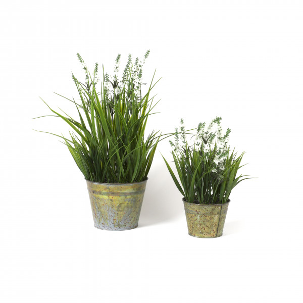 Lavendel in Zinktopf mit Gras