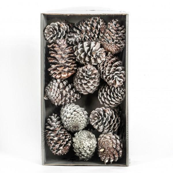 Pinus Maritima Tray x 12 Stück white washed