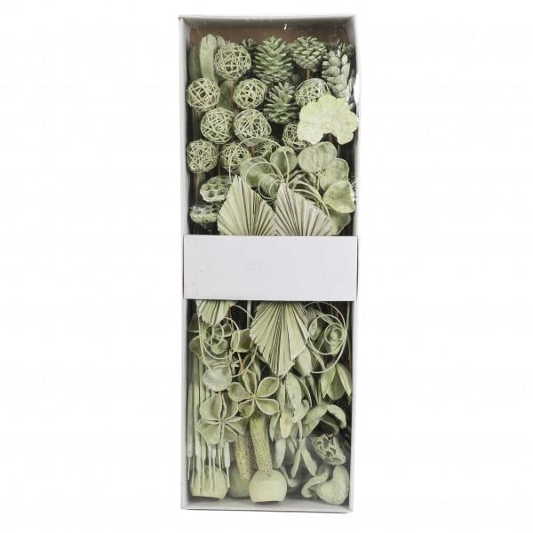 Exoten Sortiment (Fensterkarton x 125 St.) grün white washed
