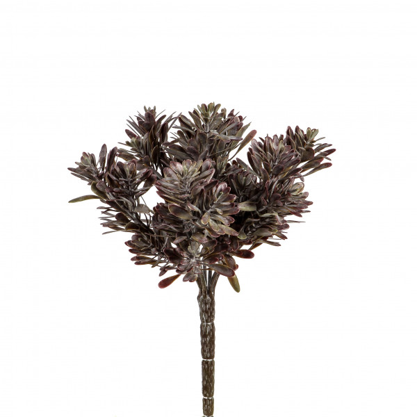 Sukkulenten-Busch, 23 cm, grün burgund