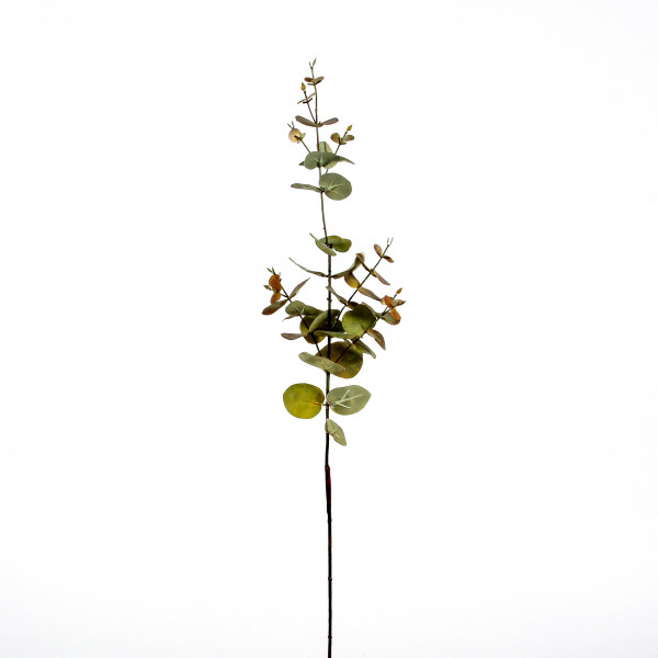 Eucalyptus-Zweig, 71cm, grün
