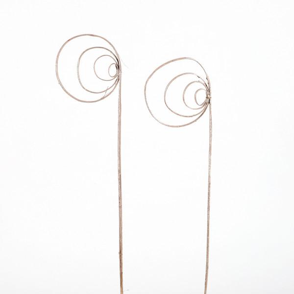 Cane Coil(Fensterkarton x 40 St. ) metallic champanger