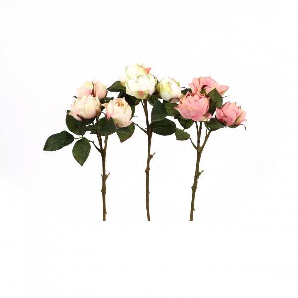 Rose Windsor , 39 cm, 3 Knospen
