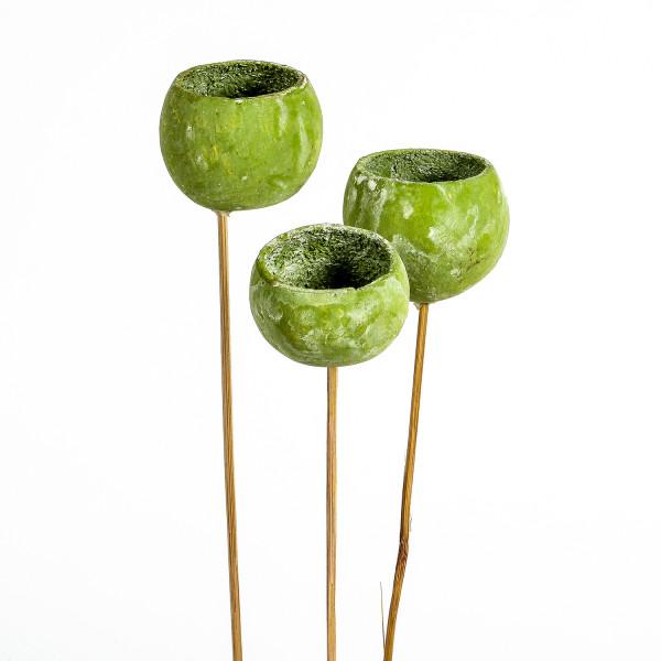 Bell Cup grün frostet (Fenster karton x 30 Stück )