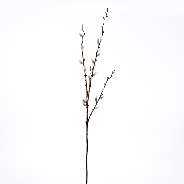 Weidenkätzchen-Zweig, 100 cm natur