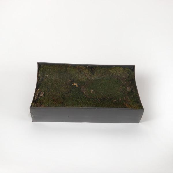 Lappenmoos Tray 500 gr. grün natur