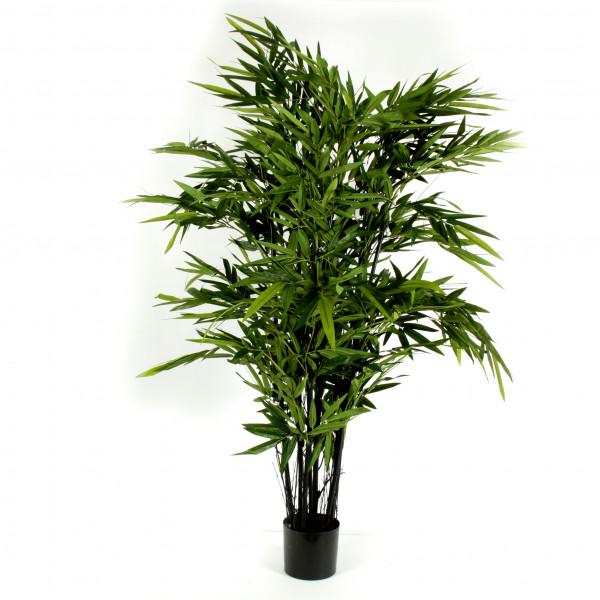 Bambus x