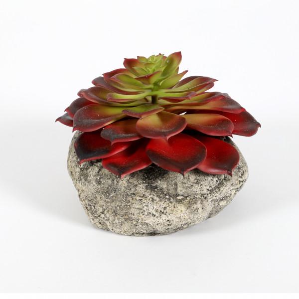 Sukkulente auf Stein, getopft, 10 cm rot-grün