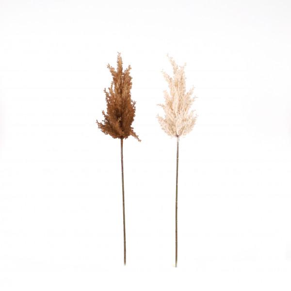 Pampasgras, 72 cm, beige