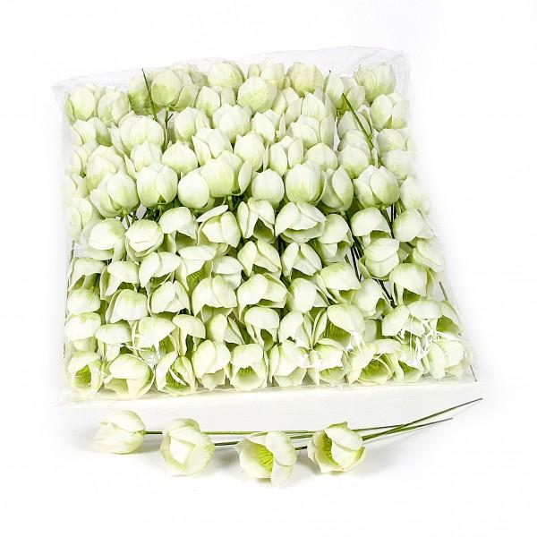 Christrose,weiß-grün