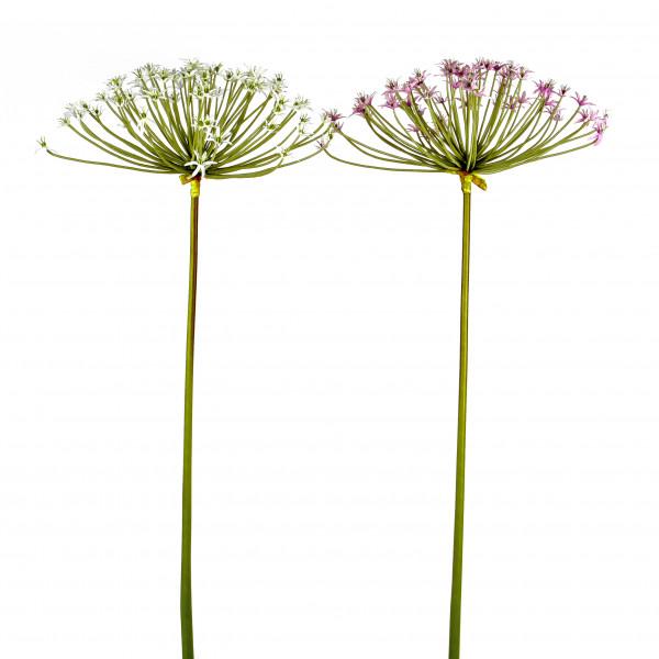 Allium, 107 cm