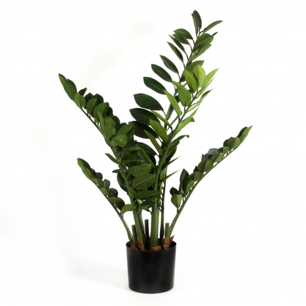 Zamioculcas x 8, 94 cm, grün