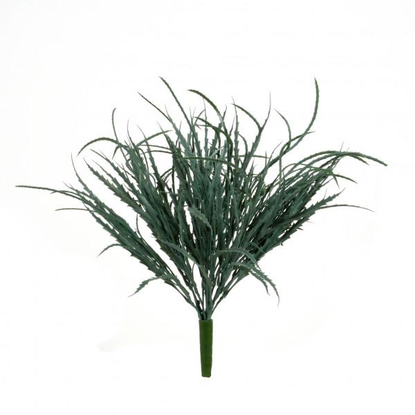 Aralia-Busch x 13, graugrün, 78 Blatt