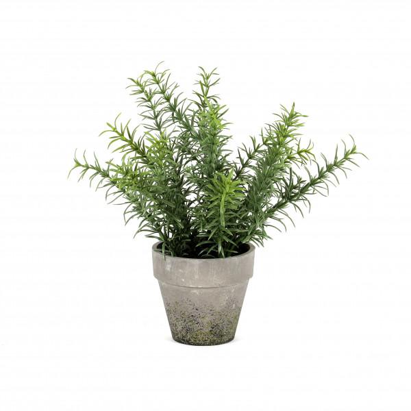 Rosmarin getopft, 30 cm, grün