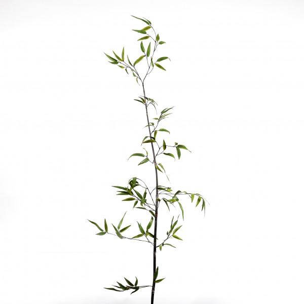 Bambus x 1, 150 cm