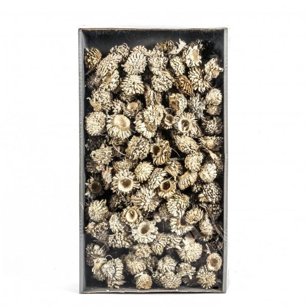 Acorn Cones Tray x 2 KG white washed Zapfen