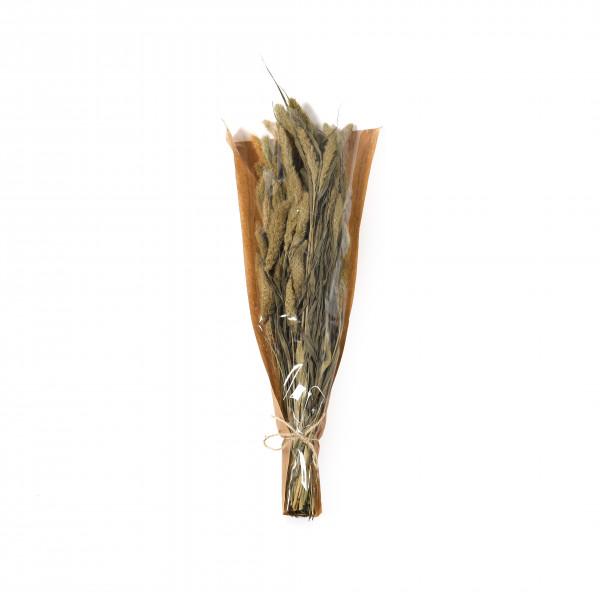 Setaria Gras 50-60 cm Bund 100 gr. natur