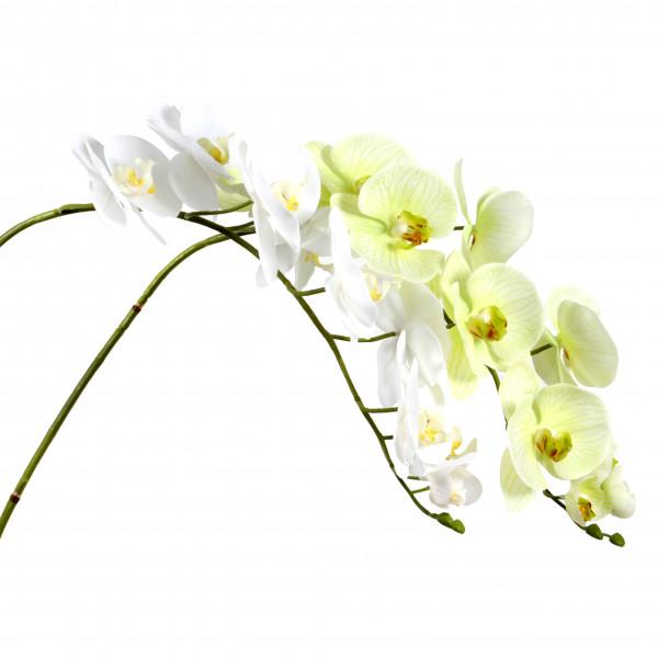 Phalaenopsis-Zweig 114 cm