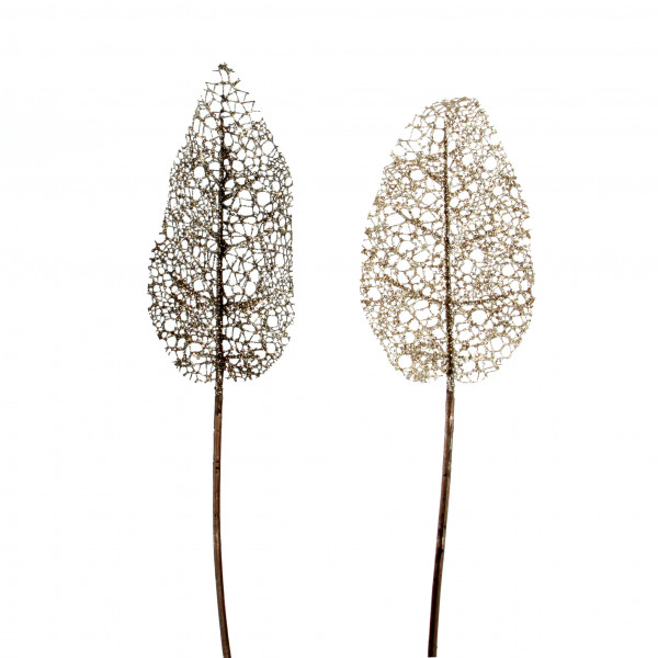 Canna-Blatt Sparkling , 74cm