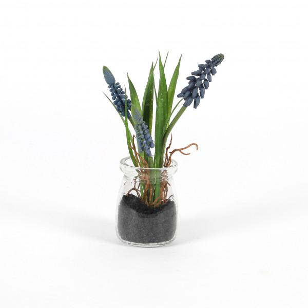 Muscari Desire , im Glastopf, 17cm, blau