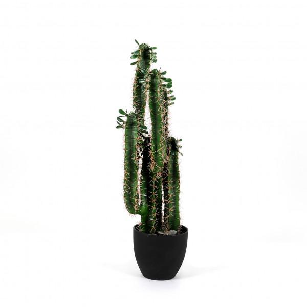 Madagaskar-Kaktus