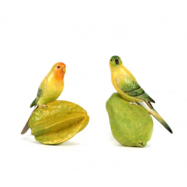Paradies-Vogel bunt a.Frucht 2 Mod.sort. 16cm