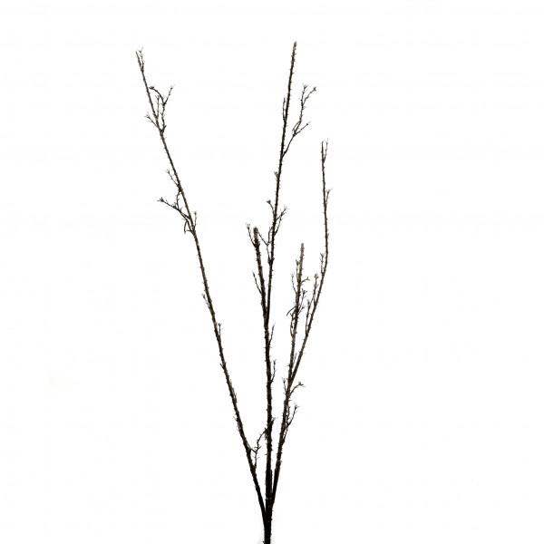 Dornenzweig x 3, 140 cm, natur