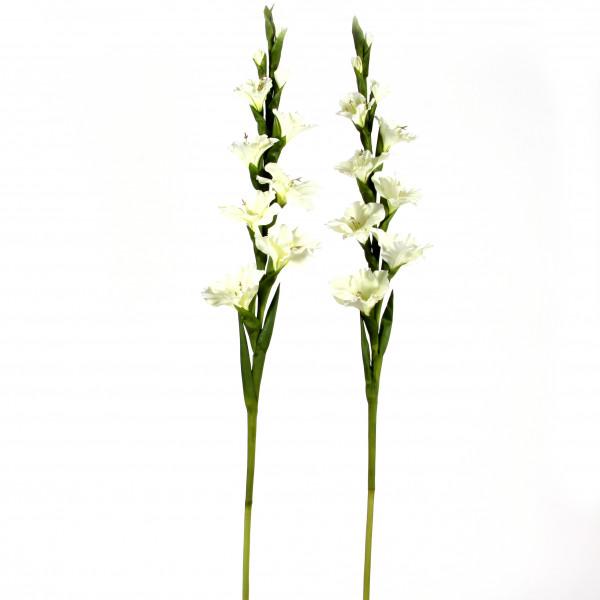 Gladiole, 108 cm, creme-weiß